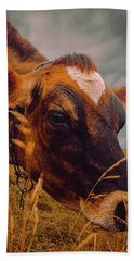 Dairy Cow Eating Grass Hand Towel