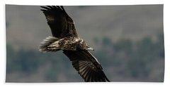 Egyptian Vulture, Sub-adult Bath Towel