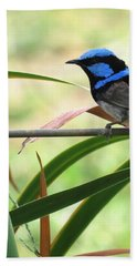 Fairy-wren 1 Hand Towel