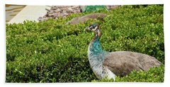 Female Peafowl At The Gardens Of Cecilio Rodriguez In Madrid, Spain Bath Towel
