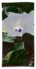 Hand Towel featuring the photograph Flower And Fly by Judy Kennedy