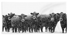 Frosty Faces Black Angus Cows Montana Hand Towel