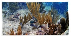 Gorgonian Parrotfish Bath Towel