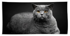 Grey Cat Laying On Black Background. Hand Towel