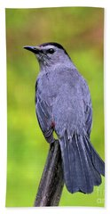Grey Catbird Bath Towel