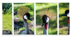 Hand Towel featuring the photograph Grey Crowned Crane Gulf Shores Al Collage 1 by Ricardos Creations