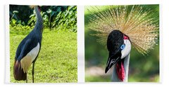 Hand Towel featuring the photograph Grey Crowned Crane Gulf Shores Al Collage 8 Diptych by Ricardos Creations