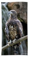 Juvenile Bald Eagle Bath Towel