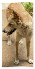 Large Australian Dingo Outside Hand Towel