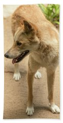 Large Australian Dingo Outside Bath Towel