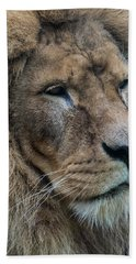 Bath Towel featuring the photograph Lion by Anjo Ten Kate