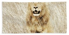 Lion In Kenya Hand Towel