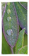 Lupin Leaves And Waterdrops Hand Towel