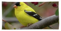Male Goldfinch Checking Me Out Hand Towel