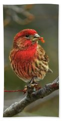 Male House Finch With Crabapple Hand Towel