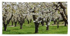 Many Cherry Blossoms In Spring Orchard Bath Towel