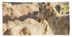 Mountain Sheep In Badlands National Park Bath Towel