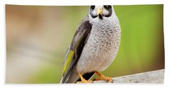 Noisy Miner Bath Towel