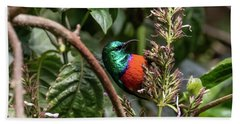 Northern Double-collared Sunbird Hand Towel