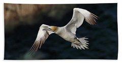 Northern Gannet In Flight Hand Towel
