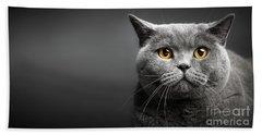 Portrait Of British Shorthair Cat On Black. Hand Towel