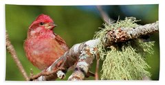 Purple Finch Hand Towel