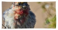 Rare Multicolored Male House Finch Hand Towel