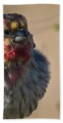 Rare Multicolored Male House Finch Bath Towel