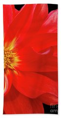 Red Dahlia On Black Background Hand Towel
