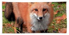 Red Fox Hand Towel