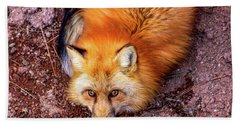 Red Fox In Canyon, Arizona Hand Towel