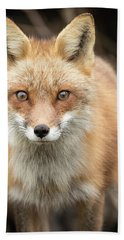 Red Fox Stare Hand Towel