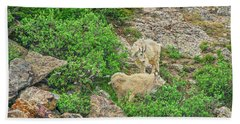 Roaming Mountain Goats In Colorado's Hinterland Hand Towel