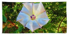 Hand Towel featuring the photograph Sacred Datura In The Golden Hour by Judy Kennedy