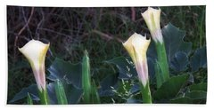 Hand Towel featuring the photograph Sacred Datura Trio - Partial Blooms by Judy Kennedy
