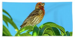 Singing House Finch Hand Towel