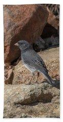 Slate-colored Junco Dsb0339 Hand Towel