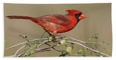 South Texas Cardinal Bath Towel