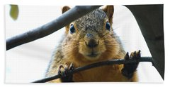 Spying Fox Squirrel Bath Towel