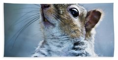 Squirrel With Nose In The Air Bath Towel