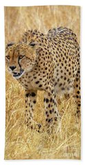 Stalking Cheetah Hand Towel