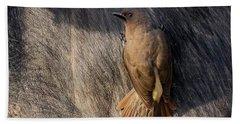Sub-adult Yellow-billed Oxpecker On Cape Buffalo Bath Towel