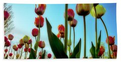 Tulip Holland Michigan 85 Hand Towel