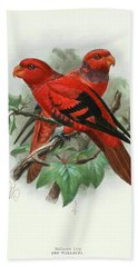 Violet-necked Lories Bath Towel