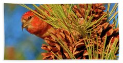 White-winged Crossbill Bath Towel