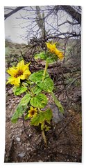 Wild Desert Sunflower Hand Towel