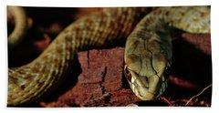 Wild Snake Malpolon Monspessulanus In A Tree Trunk Hand Towel