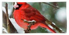 Winter Red Bird - Male Northern Cardinal With A Snow Beak Hand Towel