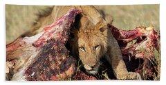 Young Lion On Cape Buffalo Kill Bath Towel