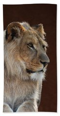 Bath Towel featuring the photograph Young Male Lion Portrait by Debi Dalio